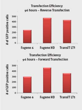 transfection efficiency lysate direct phytip columns