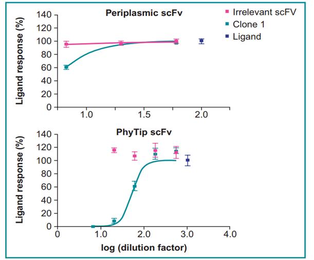 Figure_3_Phytip scFv