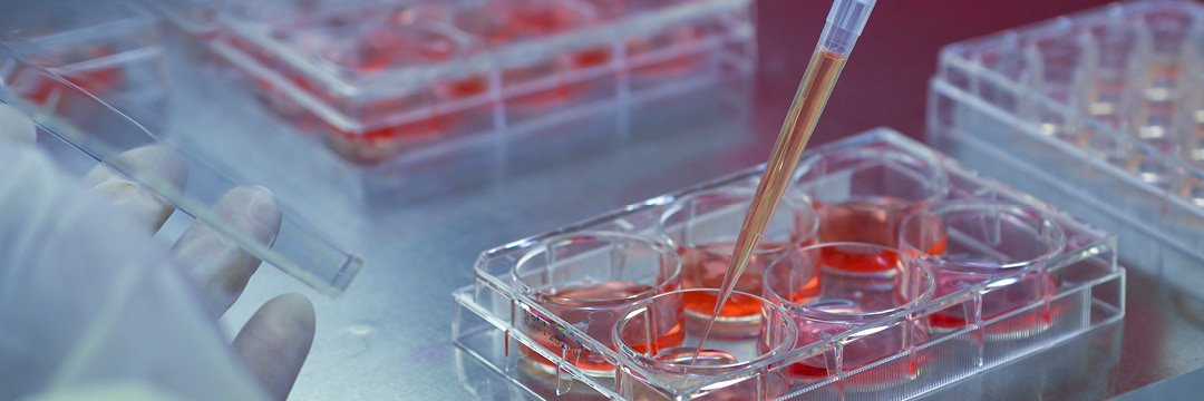 cell cultivation mammalian cells